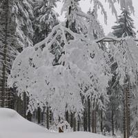 Zimowe koronki....