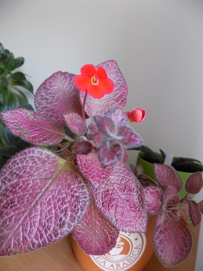 Coś różowego, specjalnie dla Uli :)