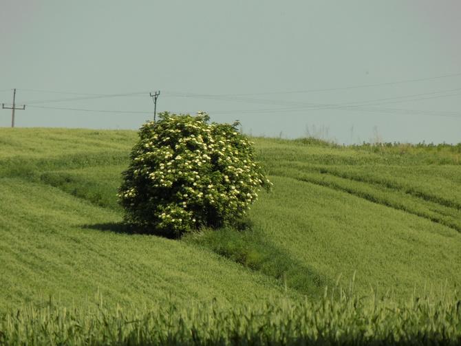 Hurtownia zieleni 2 :)