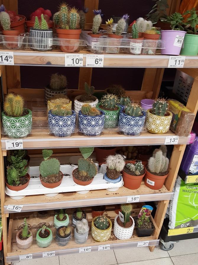 Kaktusiki ........