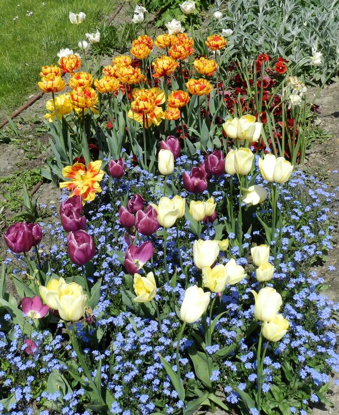 Kolorowy dywan kwiatowy
