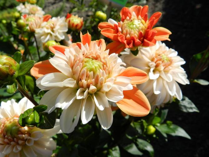 Kwiaty białe i pomarańczowe