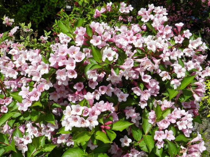 Kwiaty białe i różowe