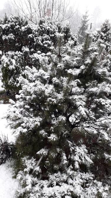 Zima 3.......