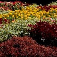 Dywan kwiatowy w parku