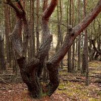 Dziwne drzewo w lesie