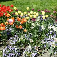 Kolorowa rabata kwiatowa