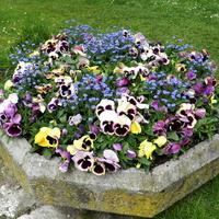 Kolorowe kwiaty w donicy