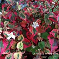 Kolory nie tylko jesieni