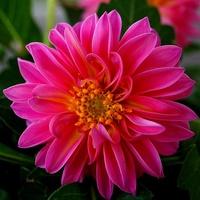 kwiat gorący