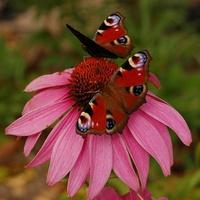 kwiat i motyle
