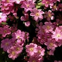 kwiatki różowe