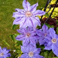 Kwiaty fioletowe