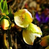 lekkie kwitnienie ...