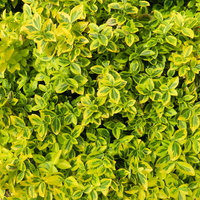 Liście zielone i żółte
