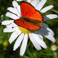 Motyl na kwiatku na łące
