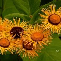 nieznane kwiatki