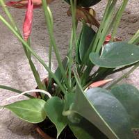 Nowe pąki kwiatowe rosną