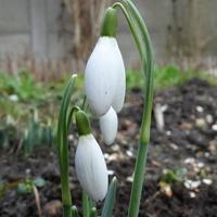 Oddzwaniają wiosnę :)