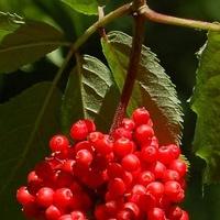 Owoce na drzewie spotkane w lesie