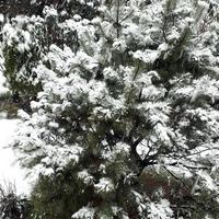 Pod śniegiem jest zieleniutko!