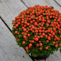 pomarańczowe koraliczki :)