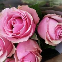 Różowych snów....