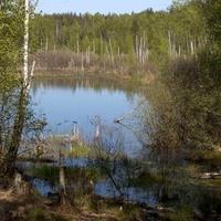 Staw (rezerwat) w Mazowieckim Parku Krajobrazowym