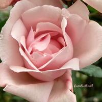 W kolorze różowym