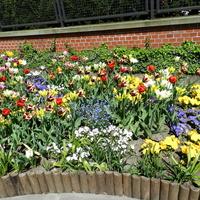Wielobarwna rabata kwiatowa