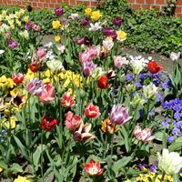 Wielobarwny ogród