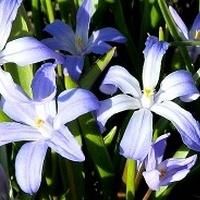 Wiosenny błękit...