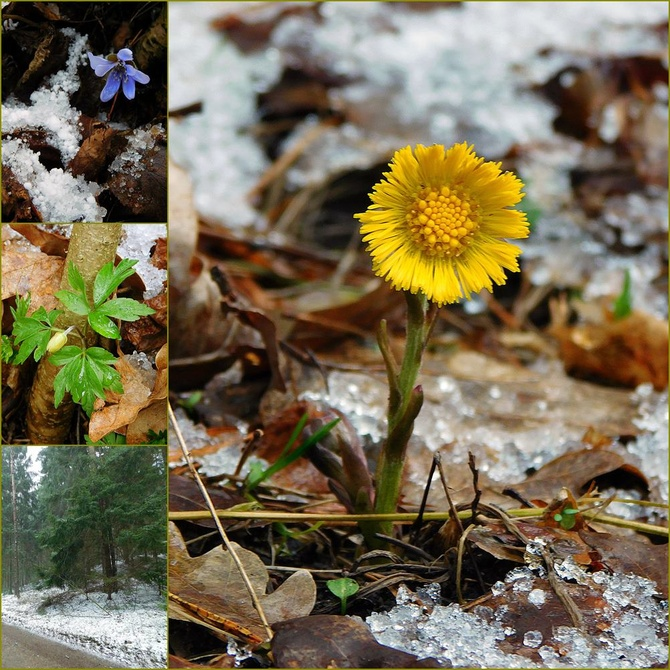 leśna wiosna ....