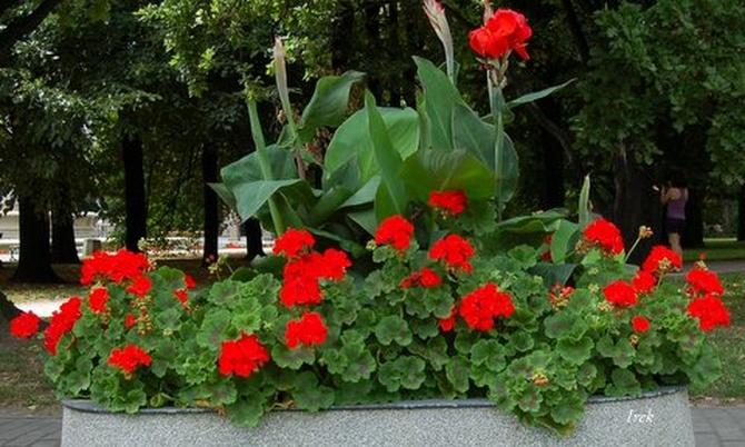 Letnie kwiaty na ulicy w moim mieście