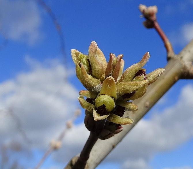 Nie tylko kwiaty, drzewa też startują :)