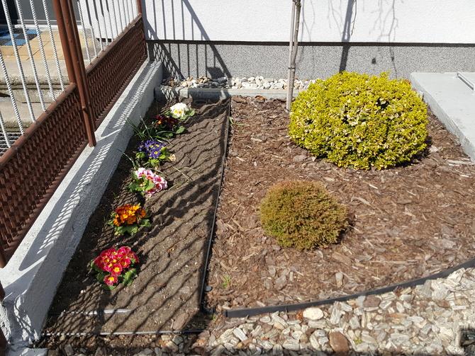 Po drodze inny mini ogródek z primulami