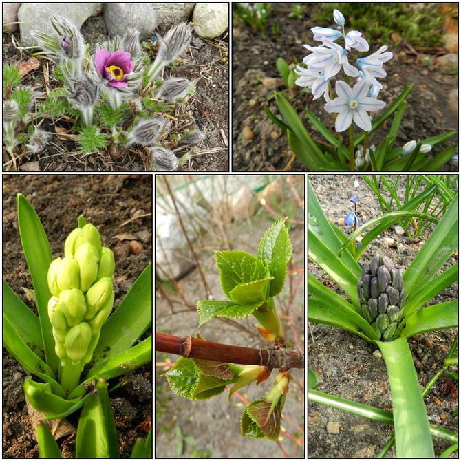 Wiosna,wiosna...