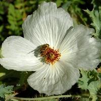 biały kwiat i owad