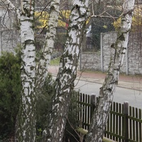 Co widać na jednym z drzew...