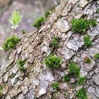 Drzewo i zielone meszki ....