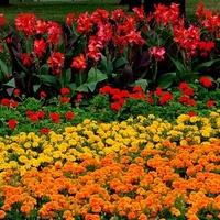 Dużo kwiatów kolorowych