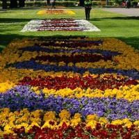 Dywanik kwiatowy w parku w moim mieście