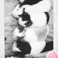 Ja i świniaki Pozdrawiamy Wszystkich