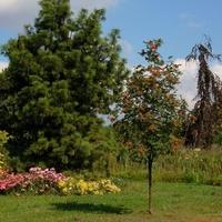 jarzębina w ogrodzie botanicznym