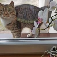 Kotek ze storczykiem.
