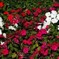 kwiatki białe i czerwone w parku