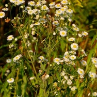 kwiaty spotkane na łące