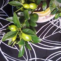 Limequat owoce rosną
