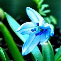 Maleństwo z pierwszym kwiatkiem:)