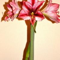 Mój kwiat domowy
